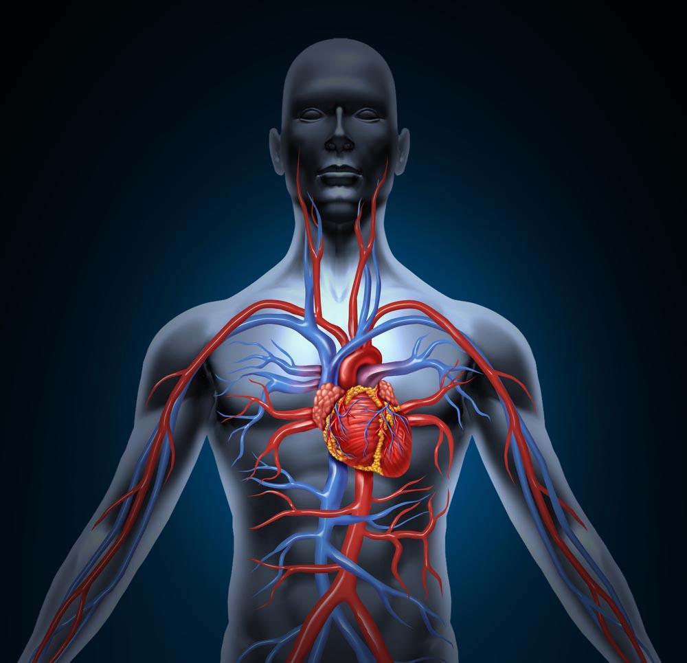 chirurgia vascolare roma